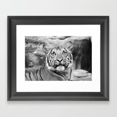 Tiger#5 Framed Art Print