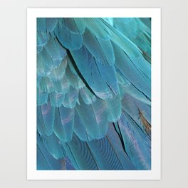 Blue Macaw Feathers Art Print