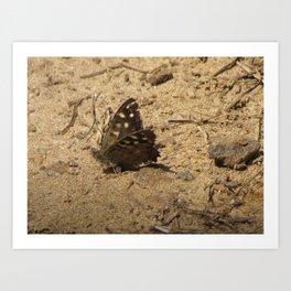 Brown Butterfly Art Print