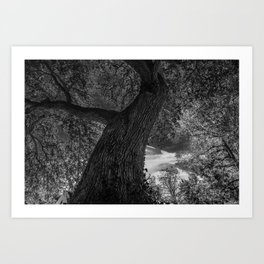 Crooked Oak (black and white) Art Print