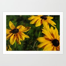 Black Eyed Susans Art Print