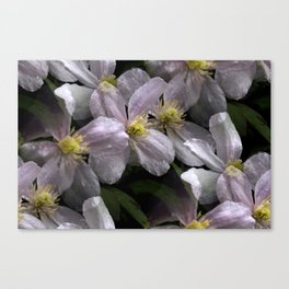 the smell of spring -2- Canvas Print
