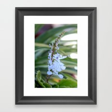 Dollar flower Framed Art Print