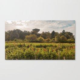 Flower field at daytime Canvas Print