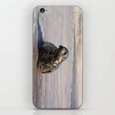 horsey seal iPhone & iPod Skin