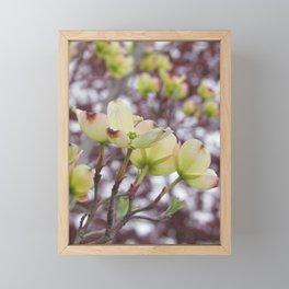 yellow dogwood flowers on black maple bokeh Framed Mini Art Print