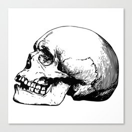 Side view of human skull illustration Canvas Print