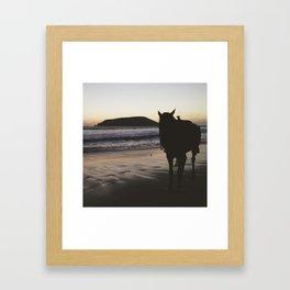 Horse on the Beach - Mexico Framed Art Print