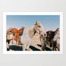Desert Equestrian Art Print