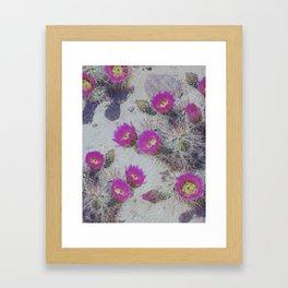 Cactus Bloom Carpet Framed Art Print