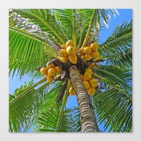 coconut wishes Canvas Prints featuring COCONUT by Lartte
