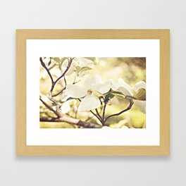 Dogwood in bloom Framed Art Print