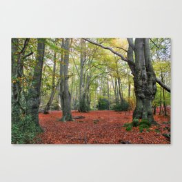 Walking Through Epping Forest Canvas Print