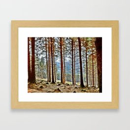Within the Forest Framed Art Print