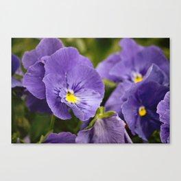 Purple Ruffles Canvas Print