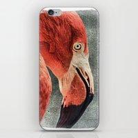 literature iPhone & iPod Skins featuring Flamingo in Literature by Mandy Tabatt