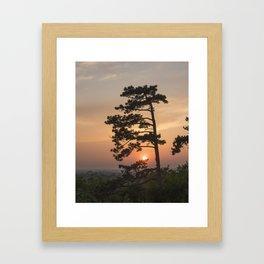 Sunset pine tree Framed Art Print
