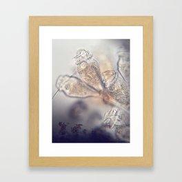 Epistylis Inspiration Framed Art Print