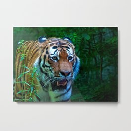 The tiger, king of the jungle Metal Print