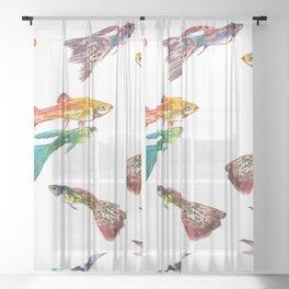 Tropical Colors, Guppy Aquarium Fish , Aquarium Art Underwater Sheer Curtain