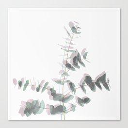 Eucalyptus Shadows Canvas Print
