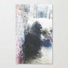 Grumpy Gorilla @ Buffalo Zoo in Buffalo, New York Canvas Print