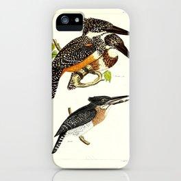 016 alcedo gigantea Giant Kingfisher4 iPhone Case