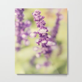 Purple Butterfly Bush Metal Print