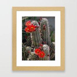 New Mexico Cactus Framed Art Print