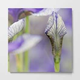 Flight of Butterflies Iris Metal Print
