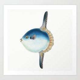 Short Sun-fish (Tetrodon Mola)  from The Natural History of British Fishes (1802) by Edward Donovan Art Print