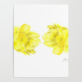 Two Yellow Peony Flowers Poster