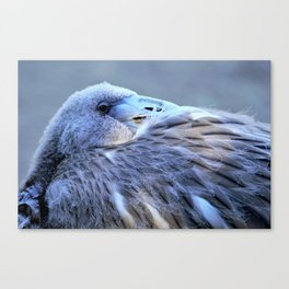 Young Flamingo Feathers Canvas Print