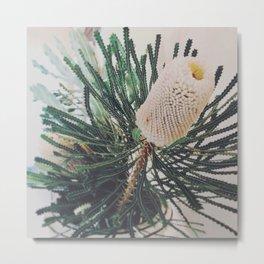 Banksia Flower  * Photography Metal Print