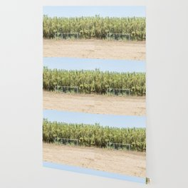 Door and soccer field with dry sand during summer Wallpaper