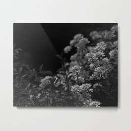 Edelweiss by Moonlight Metal Print