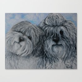 Dogs Brothers living in Holland sheep dogs Canvas Print