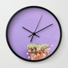 Succulent on purple wall - Colorful wall of Burano - Burano travel Art Print Wall Clock