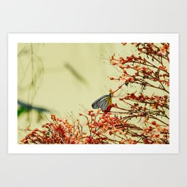 Butterfly in Singapore Art Print