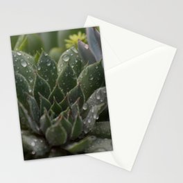 Rained on Cacti Stationery Cards