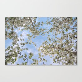 Changing Beauty Canvas Print
