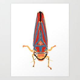 Candy-striped Leafhopper  Art Print