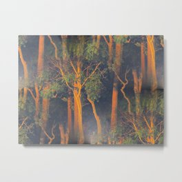 Trees Through Fog at Sunrise Metal Print