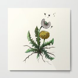 Dandelion - Taraxacum officinale Metal Print