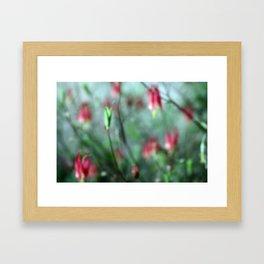 Columbine Flower Framed Art Print