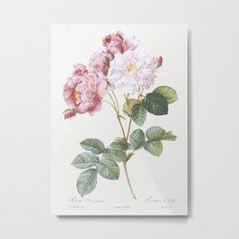 Rosa  damascena, Rosebush (Rosa damascena) from Les Roses (1817-1824) by Pierre-Joseph Redoute Metal Print