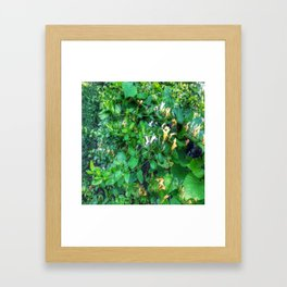 Wild Honeysuckle Framed Art Print