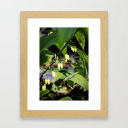 Solomon Seal Hidden Flowers, Botanical Fine Art Print, Nature Art Framed Art Print