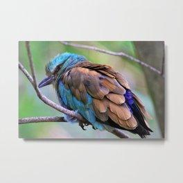 Beautiful Beautiful Bird by Reay of Light photography Metal Print