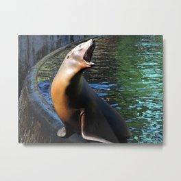 Sea Lion Song Metal Print